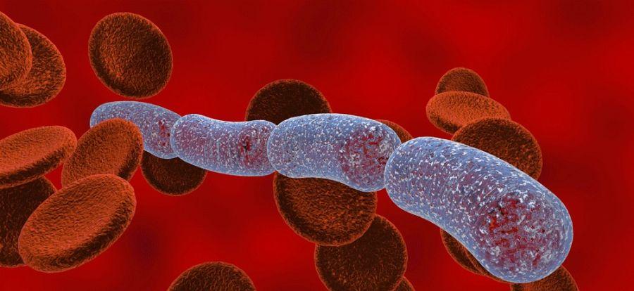 Патогенные микроорганизмы