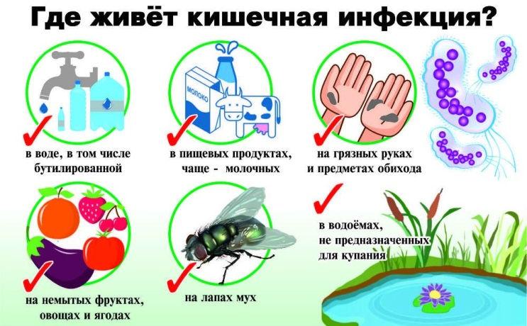Кишечная инфекция на руках, продуктах, лапках мух