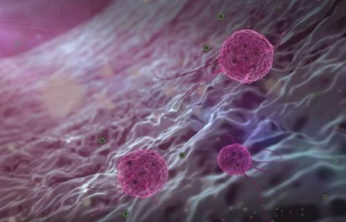 Папилломовирусы