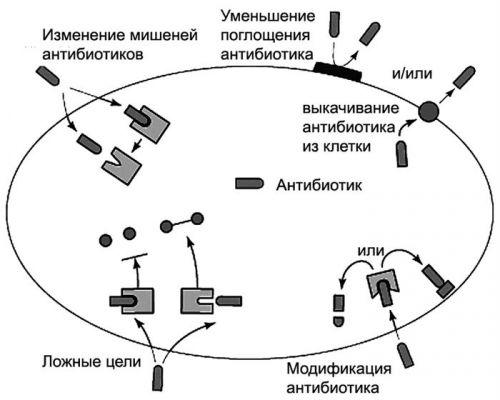 Устойчивость к антибиотику