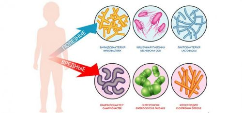 Бактерии в кишечнике
