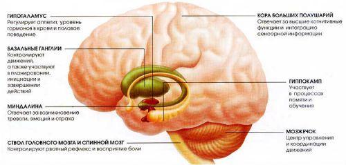Центр рвоты в головном мозге