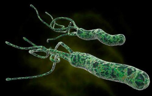 Хеликобактерия