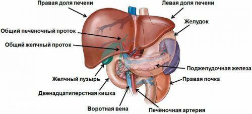 Система воротной вены