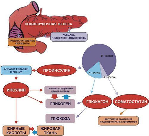 Гормоны поджелудочной железы