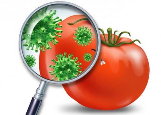 Бактерии на помидоре