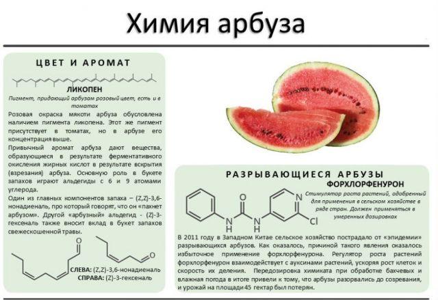 Химический состав арбуза