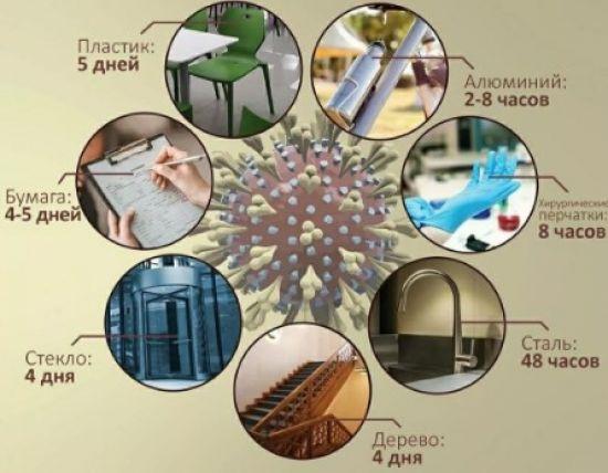 Живучесть коронавируса