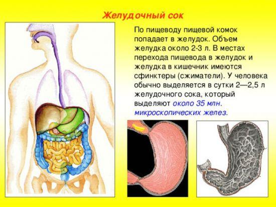 Желудочный сок