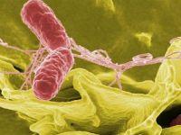 Анализ крови на дисбактериоз кишечника