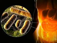 Сальмонелла в кишечнике человека