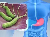 Хеликобактерия и желудок человека