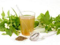 Травы для желудка: какие лекарственные и полезные сборы повышают кислотность при гастрите или язве и лечение при болях в кишечнике