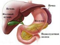Анатомия билиарной системы