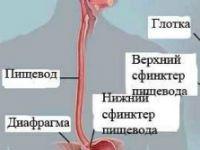 Заболевания пищевода: основные симптомы, лечение, причины болезней