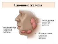 Где находится слюнная железа околоушная? Воспаление околоушной слюнной железы: причины, симптомы, лечение